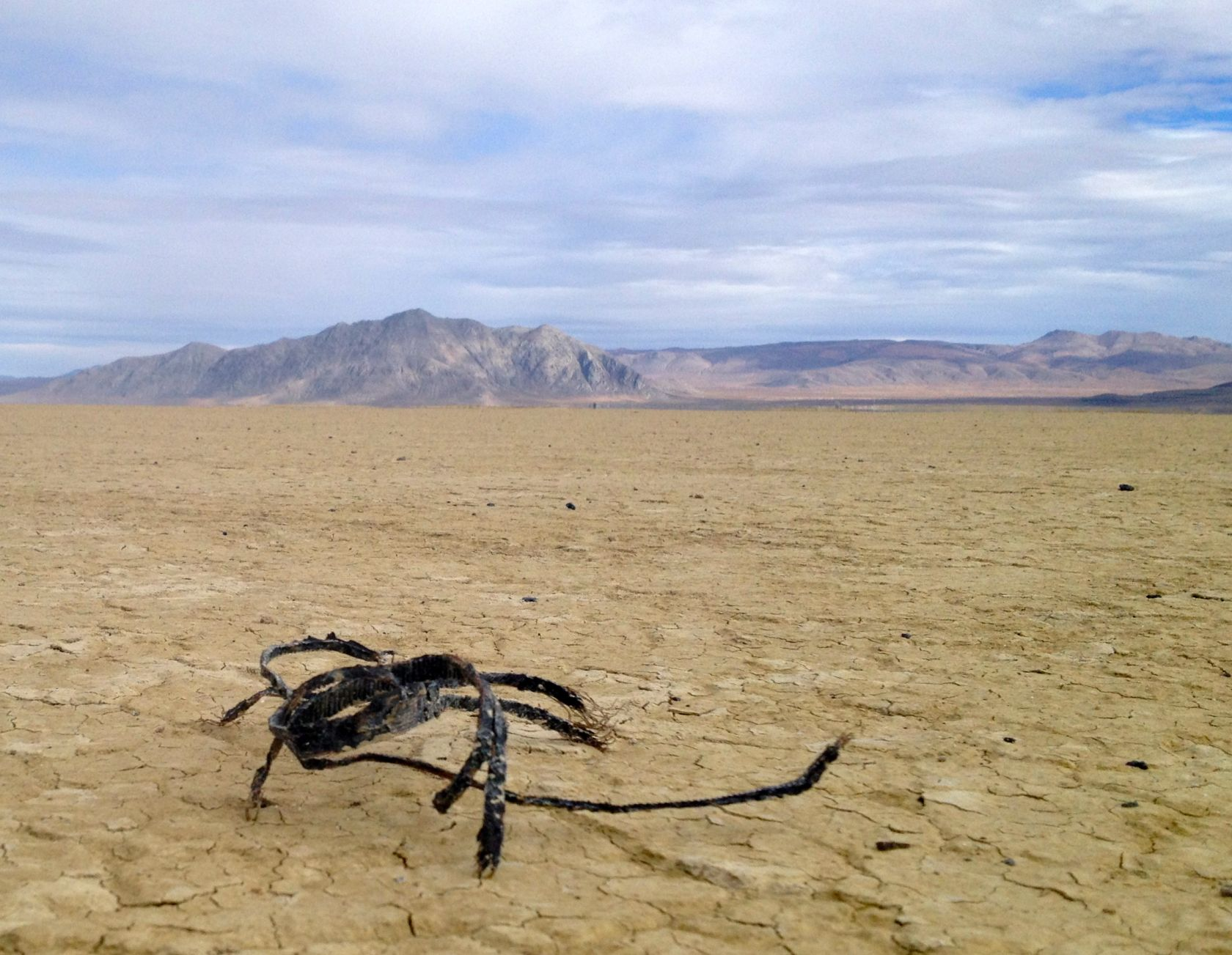 Here we uh, encounter the uh, rarely seen and even less frequently photographed FRAYWIRE ZIPTIE SCORPION of the Black Rock Desert. The DPW have captured a few of these creatures and are trying to train them to eat wood chips. So far the Fraywires are unresponsive but maybe they're frightened or dehydrated.