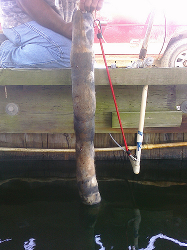 We threw one of the llama / alpaca booms in the water in the slip where Dug's boat lives. It's still floating there, collecting the oil that has just started to gather in the corner of the dock during high tide