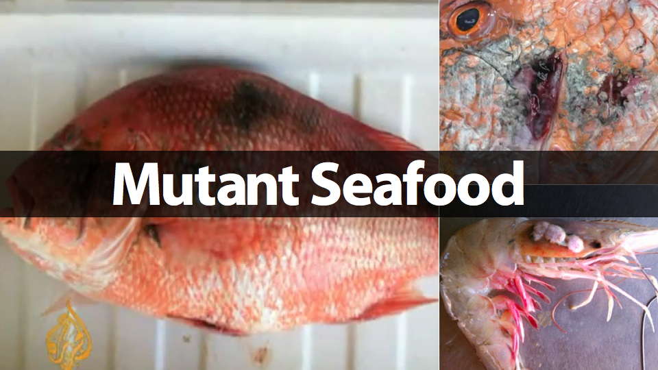 Graphic from Gizmodo, via Al Jazeera, using photos from Gulf scientists and fishermen. Yes, this is the seafood you're eating. 40% of America's seafood comes from the Gulf Coast.