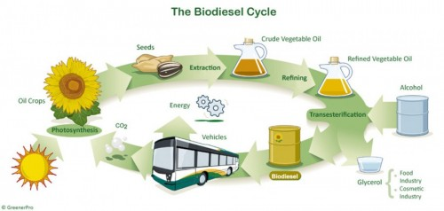 the biodiefsel cycle - from crops to fuel